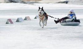 在钓鱼2012年的贝加尔湖的Mushing 免版税图库摄影