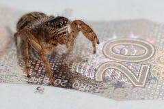 在钞票的蜘蛛 免版税库存照片