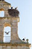 在钟楼筑巢的鹳 免版税库存图片