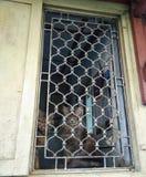 在钢棍后被监禁的猫 免版税库存图片