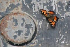 在钢背景-生锈的金属和五颜六色的昆虫的蝴蝶 免版税图库摄影
