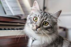 在钢琴的猫 免版税图库摄影
