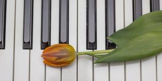 在钢琴的黑白钥匙的橙色郁金香 免版税库存图片