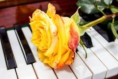 在钢琴的黄色玫瑰 免版税图库摄影