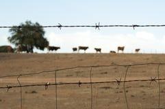 在铁丝网包围的农场的动物 免版税库存照片