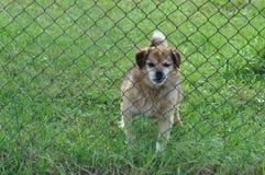 在铁丝网后的狗 库存图片