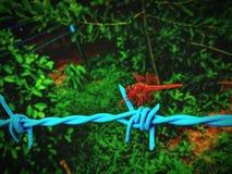 在铁丝网的蝴蝶 图库摄影