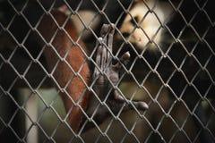 在铁栅栏的猴子的手 库存照片