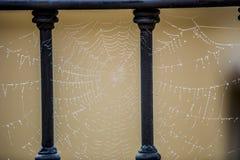 在铁栏杆上的蜘蛛网 库存照片