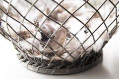 在铁碗的鸟羽毛 图库摄影