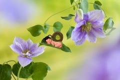 在铁线莲属花的婴孩蜗牛 免版税库存图片