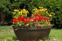 在铁罐的红色和黄色花 库存图片
