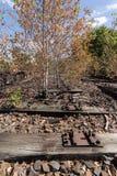 在铁路、铁路,铁路轨道,被放弃的,被毁坏的和长满的木头的树 库存图片