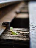 在铁路的小生活 免版税图库摄影