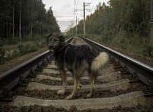 在铁路的狗 免版税库存照片