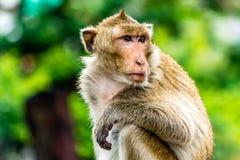 在铁路的猴子, Lopburi泰国 免版税库存图片