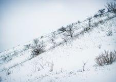 在铁路路附近的城市发光雪星期日对冬天木头 户外横向倾斜雪体育运动冬天 库存照片