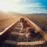 在铁路轨道/大反差图象中间的哀伤的狗 库存图片