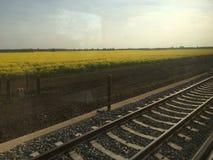 在铁路附近的油菜领域 免版税库存照片