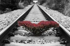 在铁轨的树 图库摄影