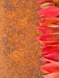 在铁锈metall背景的秋天叶子 免版税库存照片