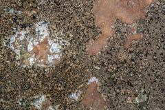 在铜色的岩石-背景的眼镜 库存照片