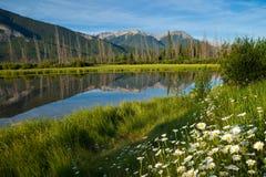 在银朱的湖的野花在班夫国家公园 库存图片