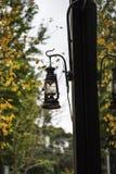 在银杏树树的一个灯笼 库存图片