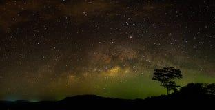在银河下的偏僻的树在晚上 免版税库存照片