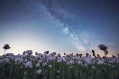 在银河下的鸦片罂粟 库存照片