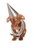 在银的小狗党 免版税库存照片