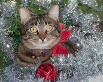 在银色圣诞节闪亮金属片的灰色虎斑猫 库存照片