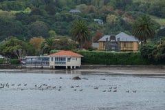 在银行半岛的Akaroa镇附近环境美化,在克赖斯特切奇东南部,新西兰 免版税图库摄影