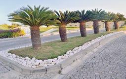 在银行营业厅风景设计的棕榈树  免版税库存图片