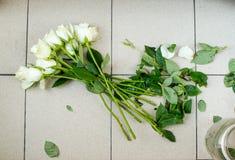 在铺磁砖的地板上的白玫瑰 库存照片
