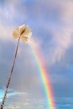 在链子被栓栓的书在彩虹上涨 库存照片