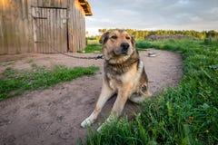 在链拘留所的狗 免版税库存图片