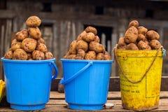 在销售中的土豆 免版税图库摄影