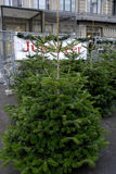 在销售中的圣诞树 库存图片