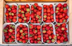 在销售中的新鲜的健康成熟草莓在小盒子 r 可口春天果子 免版税库存图片