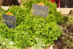 在销售中的新鲜的有机绿色莴苣在地方农夫市场上 免版税库存图片