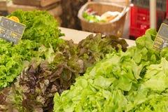在销售中的新鲜的有机莴苣在地方农夫市场上 免版税库存照片