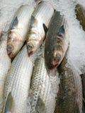 在销售中的新鲜的梭鱼在一个湿市场上 免版税库存图片