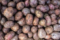 在销售中的未经治疗的生物土豆在农夫市场上 免版税库存照片