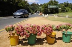 在销售中的花在路旁S非洲 库存照片