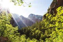 在锡安国家公园的早晨断裂 免版税图库摄影