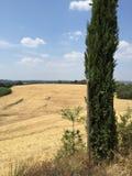 在锡耶纳,托斯卡纳,意大利附近的路旁 免版税库存图片
