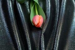 在锦织品的春天嫩桃红色郁金香 免版税库存照片