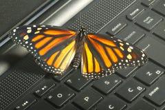 在键盘生态能量co的黑脉金斑蝶 库存图片