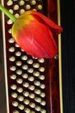 在键盘的红色郁金香 免版税库存照片